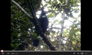 Click on Image to hear the sound of the New Zealand native Tui Bird
