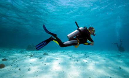 marlborough sounds diving