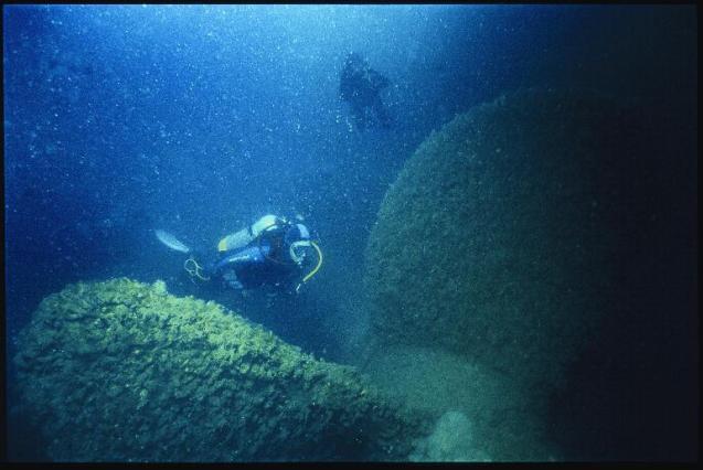 marlborough sounds scuba diving