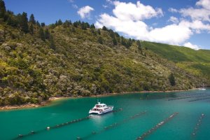 tigers-den_why-you-should-visit-marlborough-this-summer